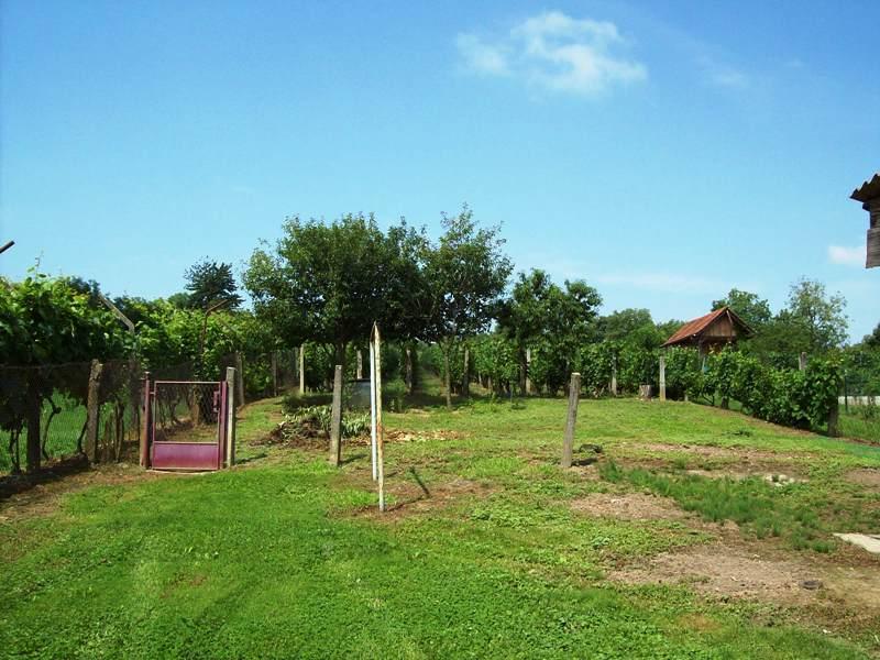 Koprivnica, kuća, dvor, voćnjak i vinograd