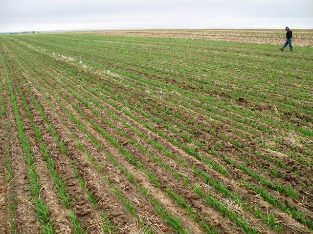 Hektar u Europi 10 puta skuplji nego u Hrvatskoj